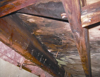 mold and rot in a Gainesville crawl space
