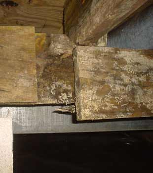 Extensive basement rot found in Jacksonville by Indoor Environmental Management