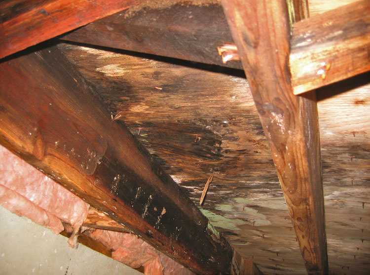 Crawl Space Mold Damage In Gainesville Jacksonville